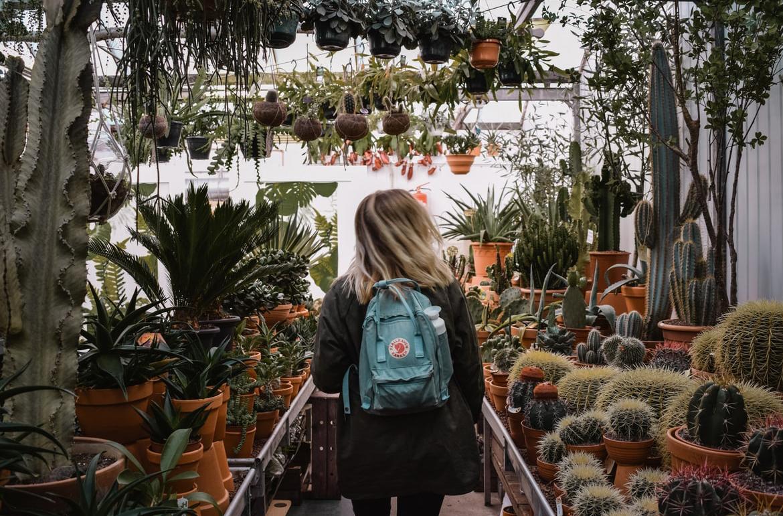 vetplanten soorten decoratie en verzorging
