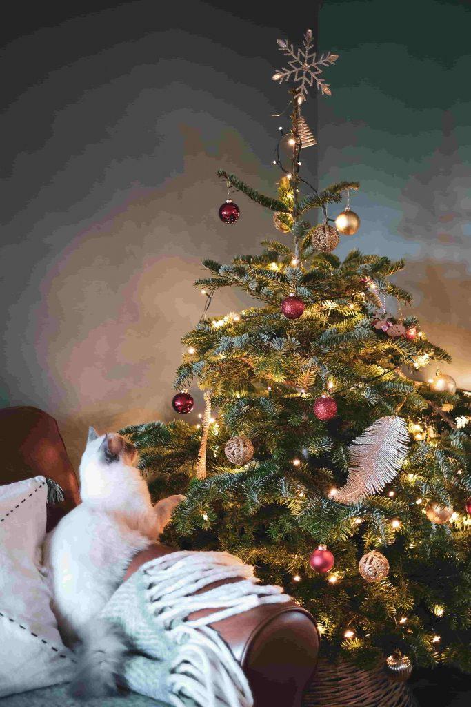 kat bij kerstboom met ballen